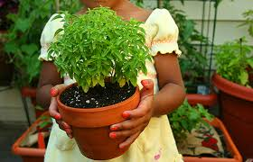the best vegetables to grow indoors