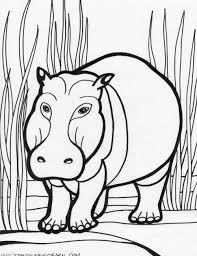 kids picture hippo coloring