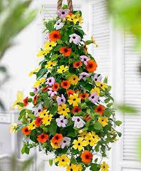 flower climbing plants promotion shop for promotional flower