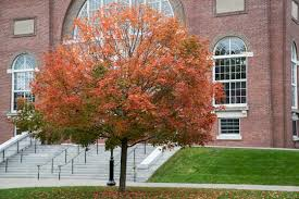 Dartmouth Campus Map 2016 Fall Foliage At Dartmouth Dartmouth News