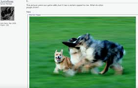 Hyper Dog Meme - blurry dogs know your meme