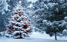 Spiral Lighted Christmas Trees Outdoor by Beautiful Outdoor Christmas Trees U2013 Happy Holidays