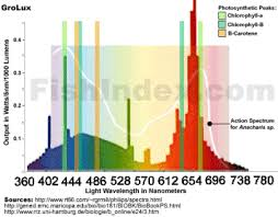 what color light do plants grow best in lighting spectrum and photosythesis lighting aquatic plant central