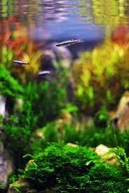 Aga Aquascaping Contest 407 Best Planted Tank Images On Pinterest Aquascaping Aquarium