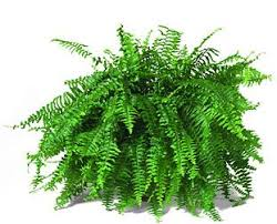 Green Plants Plants That Make Your Home Healthy