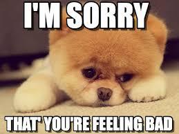 Sorry Meme - i m sorry sad puppy meme on memegen