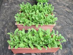 growing vegetables in containers diy with regard to pots how grow