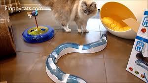ragdoll cats receive catit senses interactive cat toys