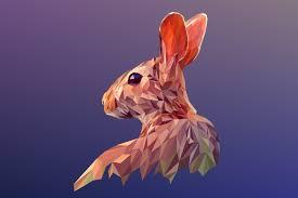imagenes abstractas hd de animales rabbit 5k retina ultra hd fondo de pantalla and fondo de escritorio