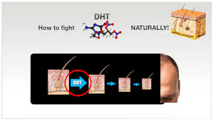 What Gets Rid Of Dht In Body | how to fight dht naturally the greatest news on baldness