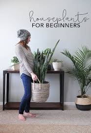 decor plants home houseplants for beginners my breezy room beautiful living