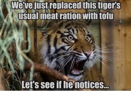 Tiger Meme - let s see if he notices funny tiger meme