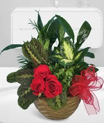 flower delivery rochester ny rochester ny florist flower delivery rochester chili ny