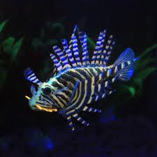 aquarium decoration fish ornaments water plants fish