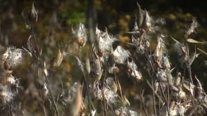 chambre d馗o nature 绝非传说中的后娘棉袄 加拿大魁省公司研制的马利筋草冬装问世 图片