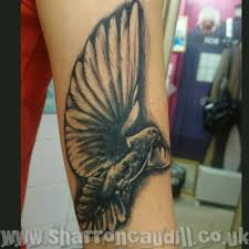 dove cover up up dove flying dove hautedraws praying and