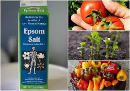 incredible uses for epsom salt in the garden