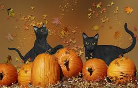 autumn halloween background cats autumn pumpkins mouse cats leaves halloween free desktop