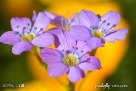 arizona flowers uncategorized in arizona