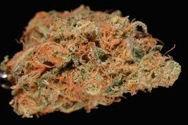 Shade Of Orange Names Best Of 2014 U0027the Top 10 Strains I Smoked This Year U0027 Reviews