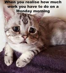 Monday Morning Meme - 11 thoughts we all have on a monday morning woman s own