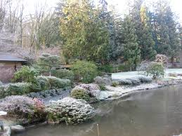 seattle japanese garden community blog winter pics of seattle