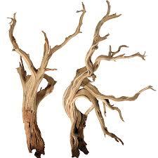 inspirations manzanita driftwood manzanita plant driftwood