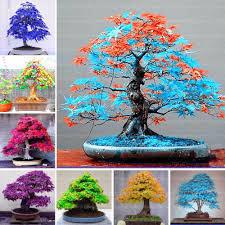Pflanzen Fur Japanischen Garten Online Kaufen Großhandel Bonsai Baum T U0026ouml Pfe Aus China Bonsai