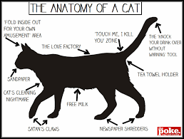 Newspaper Cat Meme - these cat anatomy illustrations will help you get to know your cat
