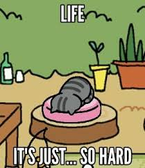 Meme Neko - life it s just so hard neko atsume know your meme