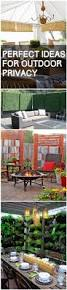 Privacy Screen Ideas For Backyard by Perfect Ideas For Outdoor Privacy Outdoor Privacy Living Fence