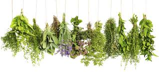 a visual guide to cooking with herbs huffpost