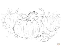 three pumpkins coloring page free printable coloring pages