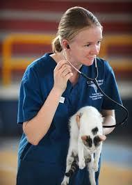 test ingresso veterinaria test veterinaria 2018 data bando miur iscrizione domande e