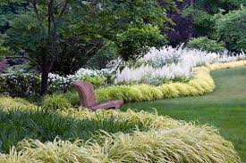 planting design ornamental grass hedges miss rumphius