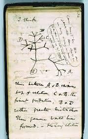 darwin s 2d tree of enters hyperspace