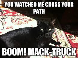Funny Friday The 13th Meme - friday the 13th cat memes quickmeme