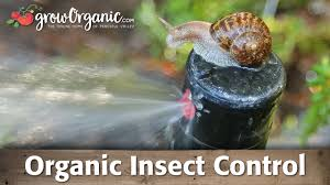 Plants That Repel Aphids by Organic Insect Control Snails Earwigs Aphids Woodlice U0026 More