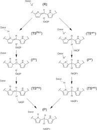 computational and experimental studies on the catalytic mechanism