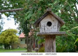 birdhouse pole stock images royalty free images u0026 vectors