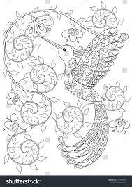 coloring page hummingbird zentangle flying bird stock vector