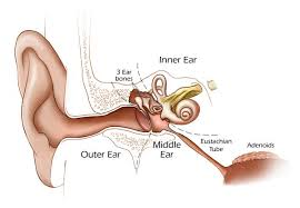 light headed and ears ringing ringing in ears caused by catarrh what doctors want you to know