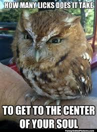 Funny Owl Meme - owl animal humor pic victoria johnson lewis katlyn victoria