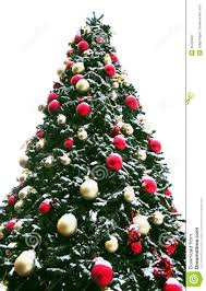 christmas tree outdoor royalty free stock photography image