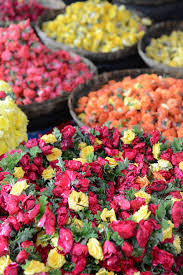 roses for sale roses for sale at indian flower market photograph by brandon bourdages