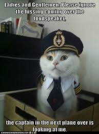 Flying Cat Meme - i can has cheezburger captain kitteh page 3 funny internet