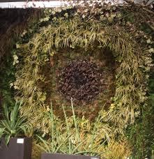 northwest flower u0026 garden show clematis in seattle