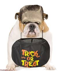 Funny Halloween Animal Costumes 10 Animal Costumes Images Costumes Pet