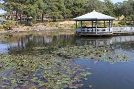 wollongong botanic gardens wollongong botanic garden pond u2014 steemit