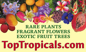 Fragrant Flowers For Garden - toptropicals com rare plants for home and garden
